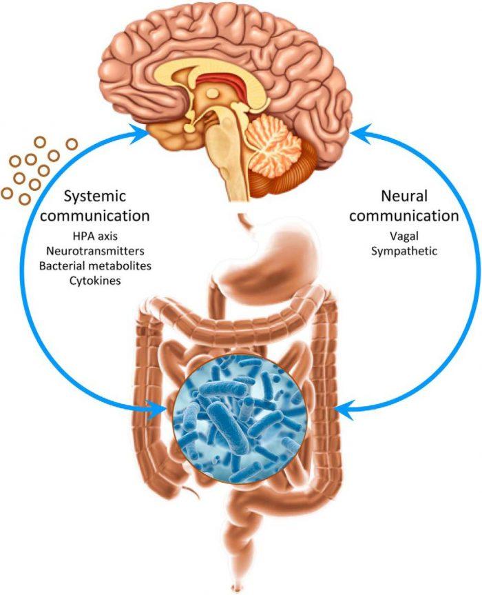 Hệ khuẩn chí đường ruột tác động lên tâm thần như thế nào? 1
