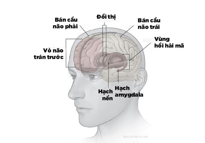 Trầm cảm gây tổn thương thực sự ở não bộ 1