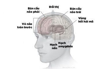 Rối loạn lo âu trầm cảm ảnh hưởng nghiêm trọng đến não