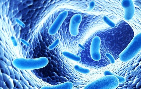 Phương pháp giải tỏa căng thẳng mới: sử dụng probiotic chuyên biệt 1