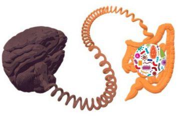 Vi khuẩn đang điều khiển tâm trí của chúng ta – sự thật hay chỉ là tin đồn thất thiệt?