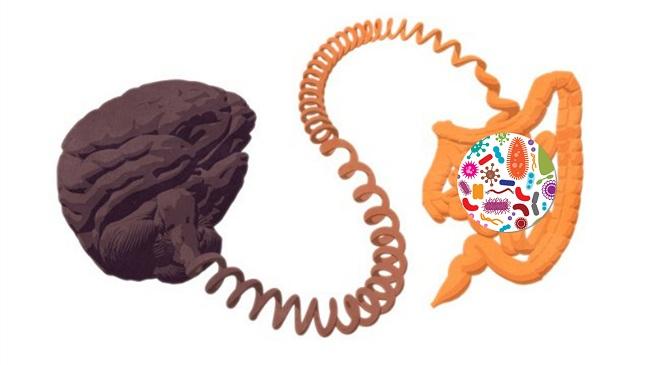 Vi khuẩn đang điều khiển tâm trí của chúng ta – sự thật hay chỉ là tin đồn thất thiệt? 1