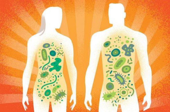 Hệ khuẩn chí đường ruột là gì? 1