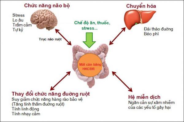 Tại sao hệ khuẩn chí đường ruột lại quan trọng? 1