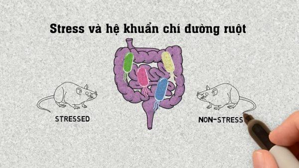 Hệ khuẩn chí đường ruột ảnh hưởng tới stress 1